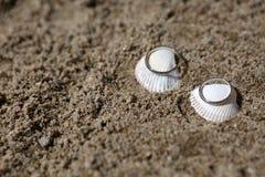 Trouwringen op overzeese shell Royalty-vrije Stock Foto