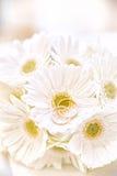 Trouwringen op witte Bloemen Stock Afbeeldingen