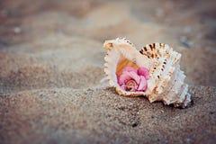 Trouwringen in shell op overzeese kust stock afbeelding