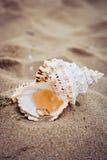 Trouwringen in shell op overzeese kust royalty-vrije stock afbeelding