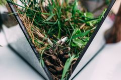 Trouwringen van witgoud in een glasdoos met mos, g wordt gevuld dat Royalty-vrije Stock Afbeelding