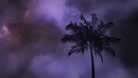 Trovão e palmeira na noite video estoque