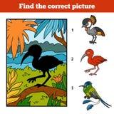Trovi l'immagine corretta Color scarlatto dell'ibis e fondo Immagine Stock Libera da Diritti