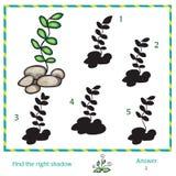 Trovi l'ombra dell'immagine Fotografie Stock
