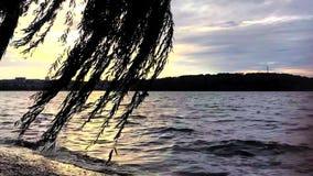 Trow Sonnenuntergang des Sommerfreien raumes der Baum im Jachthafen stock footage