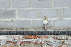 Trowel on cinderblock gray background. against the background of the brickwork is trowel. Trowel on cinderblock gray background. against the background of the Stock Photography