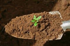 Trowel di giardinaggio Fotografia Stock Libera da Diritti