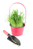 Trowel and grass Royalty Free Stock Images