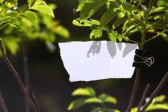 Trozo de papel en blanco en naturaleza Foto de archivo libre de regalías