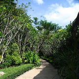 Trópicos verdes Fotos de Stock