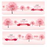 Três bandeiras da mola com as árvores de florescência de sakura. Foto de Stock Royalty Free