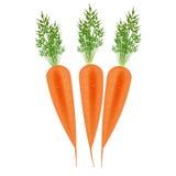Três cenouras alaranjadas Imagens de Stock