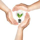 Três mãos com lâmpada Foto de Stock Royalty Free