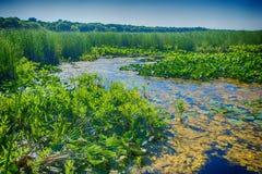 Träskområde i den punktPelee nationalparken Royaltyfria Bilder