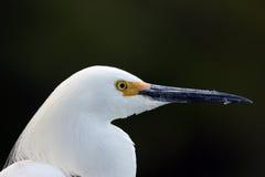 Trésor de Sarasota Images stock