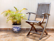 Trästol och palmträd i kruka Arkivbild
