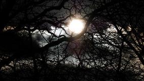 Tru ήλιων τα δέντρα Στοκ φωτογραφία με δικαίωμα ελεύθερης χρήσης