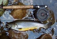 Trucha de arroyo de oro Foto de archivo libre de regalías