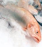 Trucha de color salmón fotos de archivo