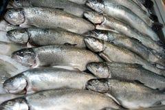 Trucha fresca en el hielo en un supermercado pescados en tienda fotografía de archivo