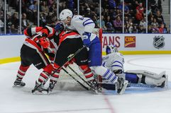 Truchas arco iris de Mississauga contra Ottawa 67 Juego de hockey Imagen de archivo