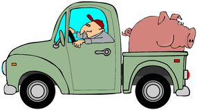 Truck που μεταφέρει ένα γουρούνι Στοκ Εικόνες
