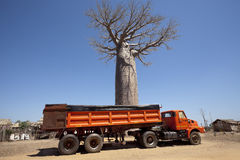 Truck with baobab tree Stock Photos