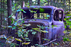 Truck cab in the forest. A truck cab rusts away in the forest Royalty Free Stock Photography