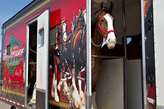 Truck carrying Budweiser Clydesdales Stock Photo