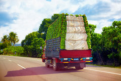 A truck carrying a load of bananas, driving through Dominican Republic road Royalty Free Stock Photography