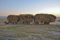 Truck. Collects hay in the fields Royalty Free Stock Photo