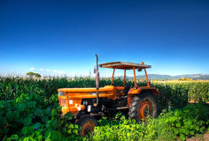 Truck in countryside. Royalty Free Stock Images