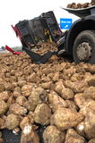 Truck destroy by turnips vertical Stock Photo
