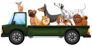 Truck and dogs Royalty Free Stock Image
