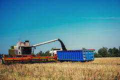 Truck and Excavator harvest off. Royalty Free Stock Photo