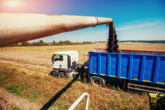 Truck and Excavator harvest off. Royalty Free Stock Photos