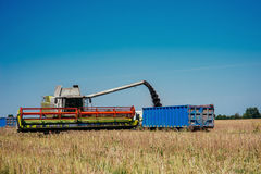 Truck and Excavator harvest off. Stock Images