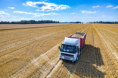 The truck filled with wheat seeds Royalty Free Stock Photos