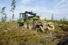 Truck and forest clearing Stock Image
