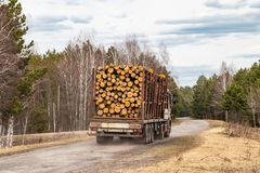 A truck with the forest passes on the highway, industrial transportation of pine royalty free stock photo