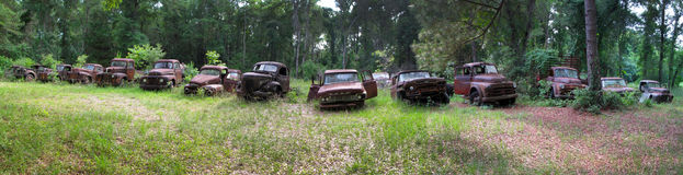 Truck Graveyard - Wakulla Florida. Old trucks of many manufacturers sit at their final resting place rusting as the surrounding trees and bushes reclaim the Stock Image