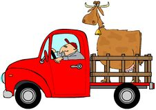Truck hauling a cow Royalty Free Stock Images