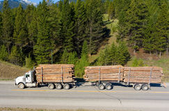 A truck hauling felled pine trees in british columbia Royalty Free Stock Photos