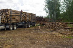 Truck hauling logs. A view of the trailer of a large lumber or logging truck loaded with tree-length logs in a logging operation in the woods Stock Photos