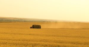 Truck with hay on the wheat field Stock Photo