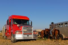 Truck and horse trailer at the rodeo arena stock photography