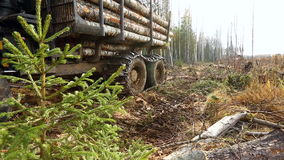 Truck laden with logs moves through forest stock footage