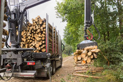 Truck lifting tree trunks with grabber on trailer Royalty Free Stock Images