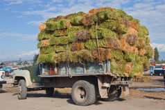 Truck with a load of hay in bales Royalty Free Stock Images