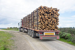 Truck with load of tree trunks of eucalyptus Royalty Free Stock Photography